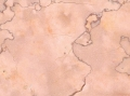rosa-atlantide