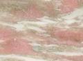rosa-norvegia